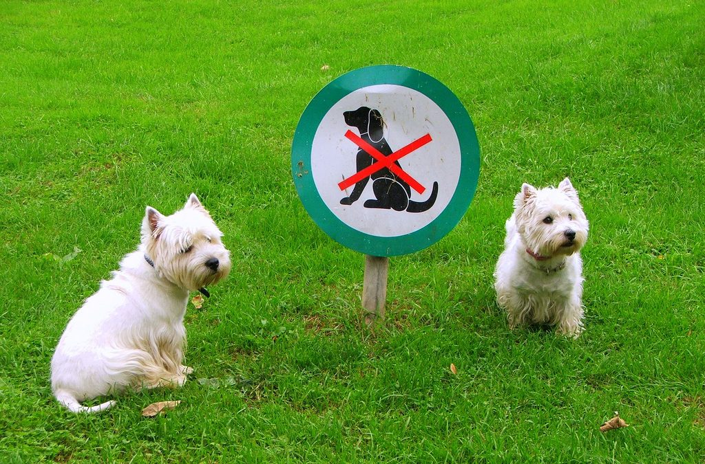 Animals and Your HOA — The Straight Poop
